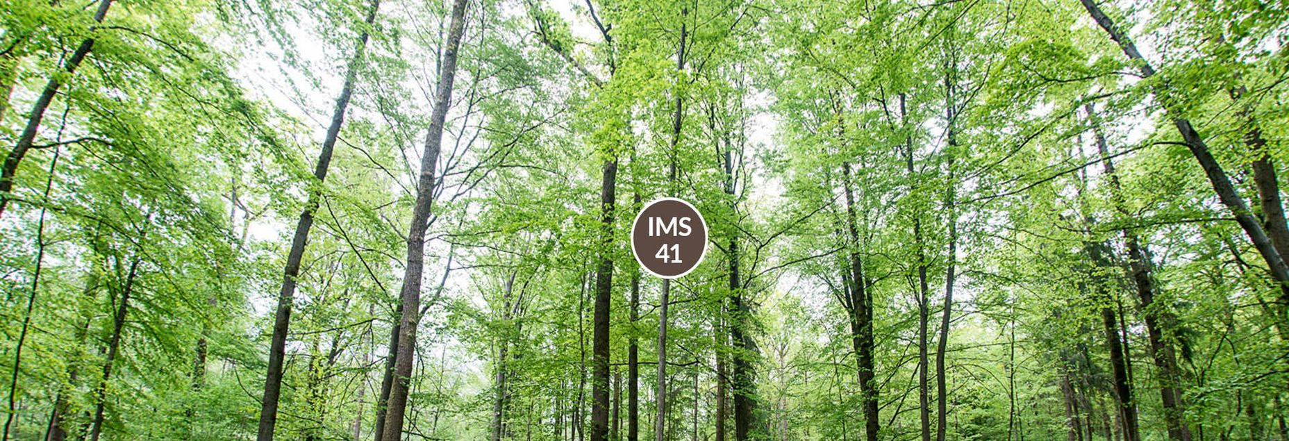FriedWald-Onlineshop IMS 41