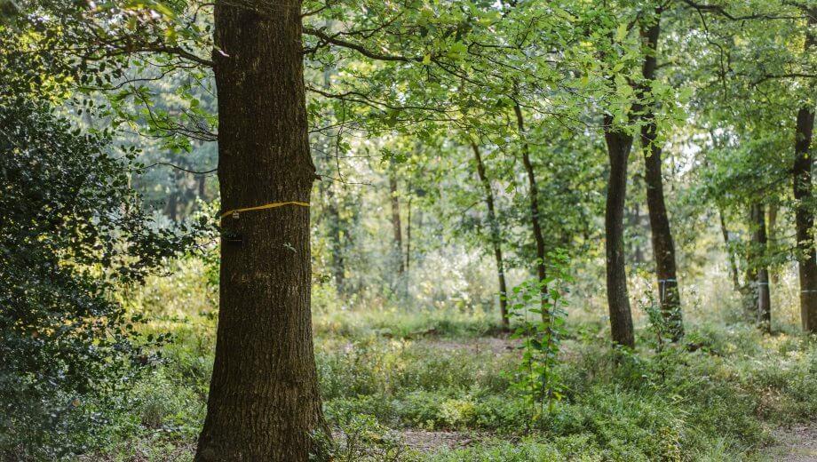 Bestattungsbaum im FriedWald