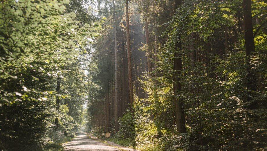 friedwald kisdorf