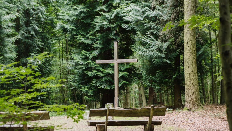 Waldhessen - FriedWald - Die Bestattung in der Natur