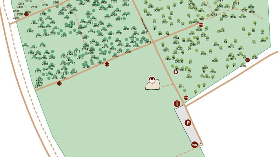 Baumsuche Friedwald Die Bestattung In Der Natur